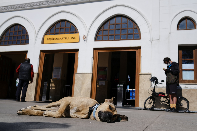 Boji lies on the ground in front of the Beşiktaş pier in the Kadıköy district, in Istanbul, Turkey, Oct. 5, 2021. (Reuters Photo)