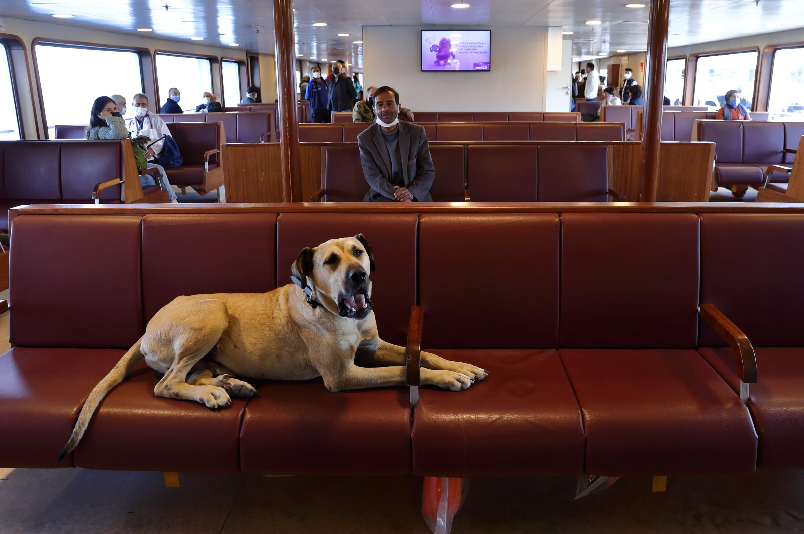 Street dog Boji sits in a ferry that runs between the city's Asian and European sides, Istanbul, Turkey, Oct. 5, 2021. (Reuters Photo)