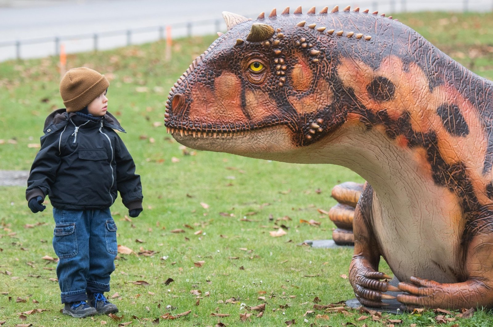 A two-year-old boy curiously looks at the model of a Carnotaurus in front of the Landesmuseum, in Lower Saxony, Hanover, Germany, Nov. 10, 2020. (Getty Images)