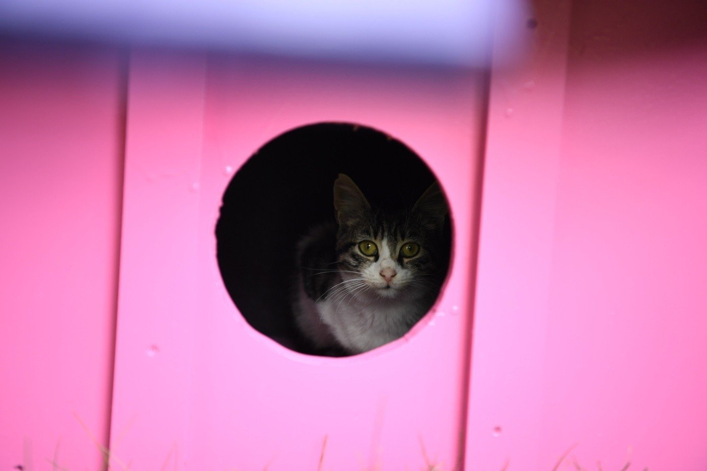 A cat looks out the window of her house, in the town of Kartepe, in Kocaeli, northwestern Turkey, Oct. 8, 2021. (İHA PHOTO)
