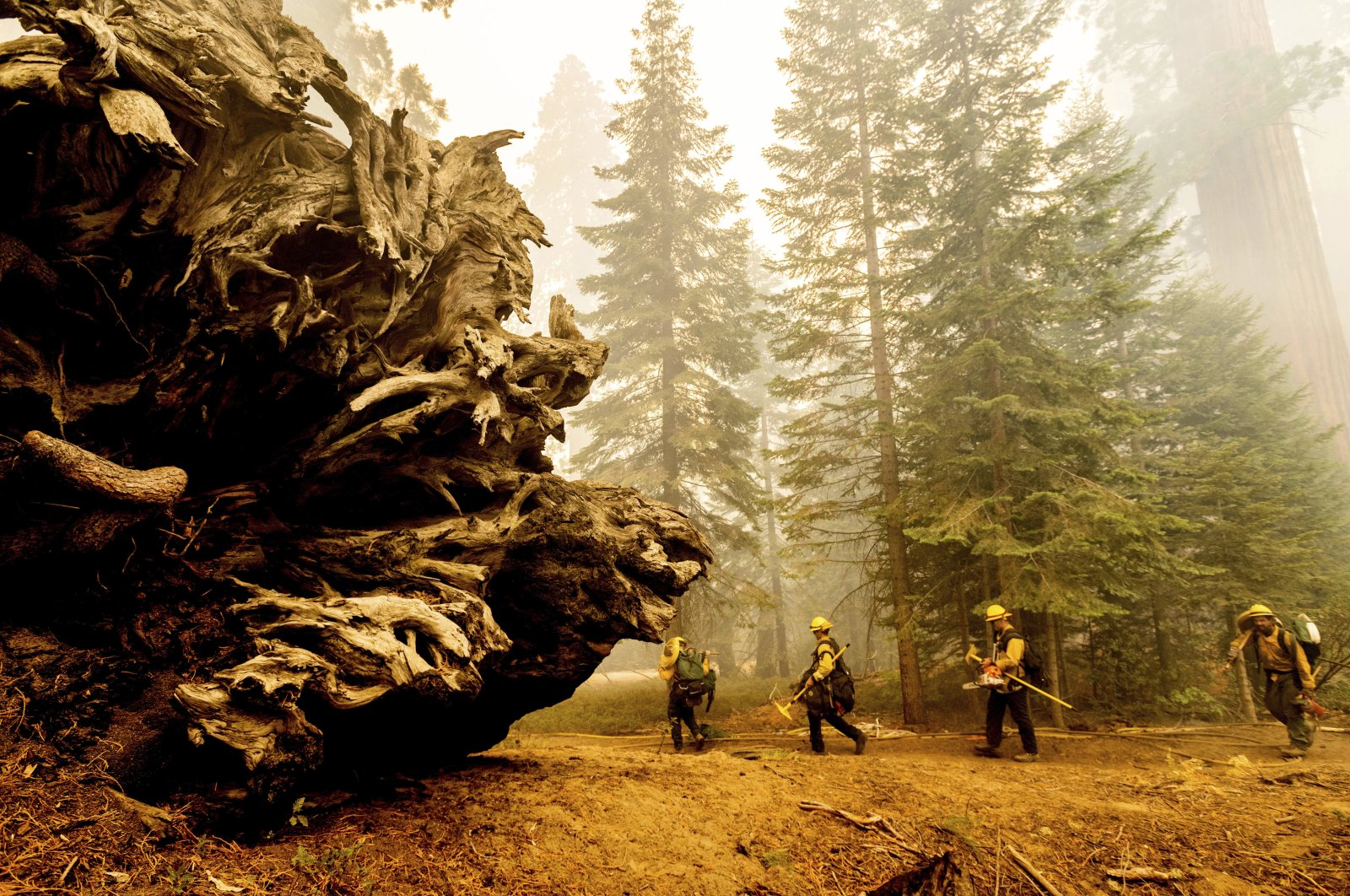 Firefighters battle the Windy Fire as it burns in the Trail of 100 Giants grove of Sequoia National Forest, California, U.S., Sept. 19, 2021. (AP Photo)