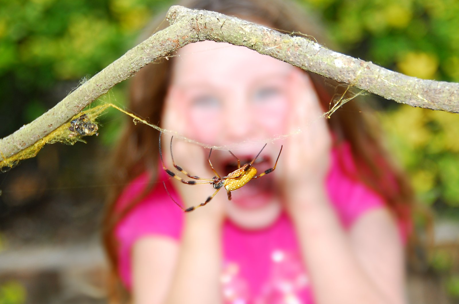 In the case of a phobia, the decisive factor is not how dangerous something actually is, but how dangerous the amygdala – a primitive part of the brain – thinks it is. (Shutterstock Photo)
