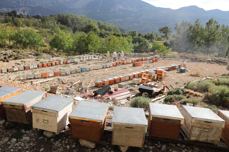 Beehives in the village of Çökek, Muğla province, southwestern Turkey, Sept. 23, 2021. (AFP Photo)