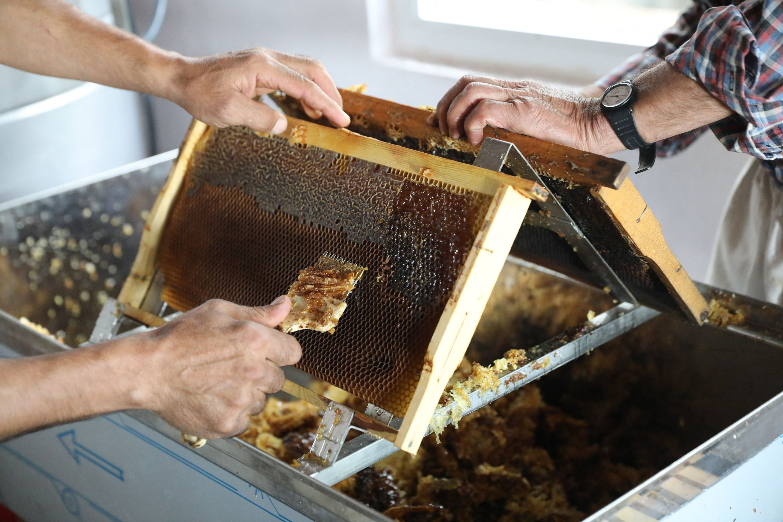 Turkish beekeepers Fehmi Altı, 47, and his father Mustafa Altı, 71, scrape the honeycomb frames to prepare the honey extraction, in the village of Çökek, Muğla province, southwestern Turkey, Sept. 23, 2021. (AFP Photo)