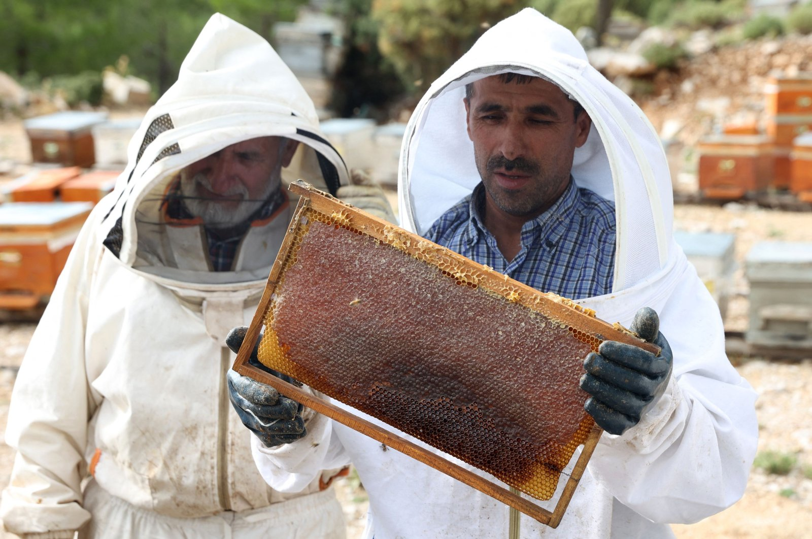 Turkish beekeepers Fehmi Altı (R), 47, and his father Mustafa Altı, 71, look at their bees, in the village of Çökek, Muğla province, southwestern Turkey, Sept. 23, 2021. (AFP Photo)