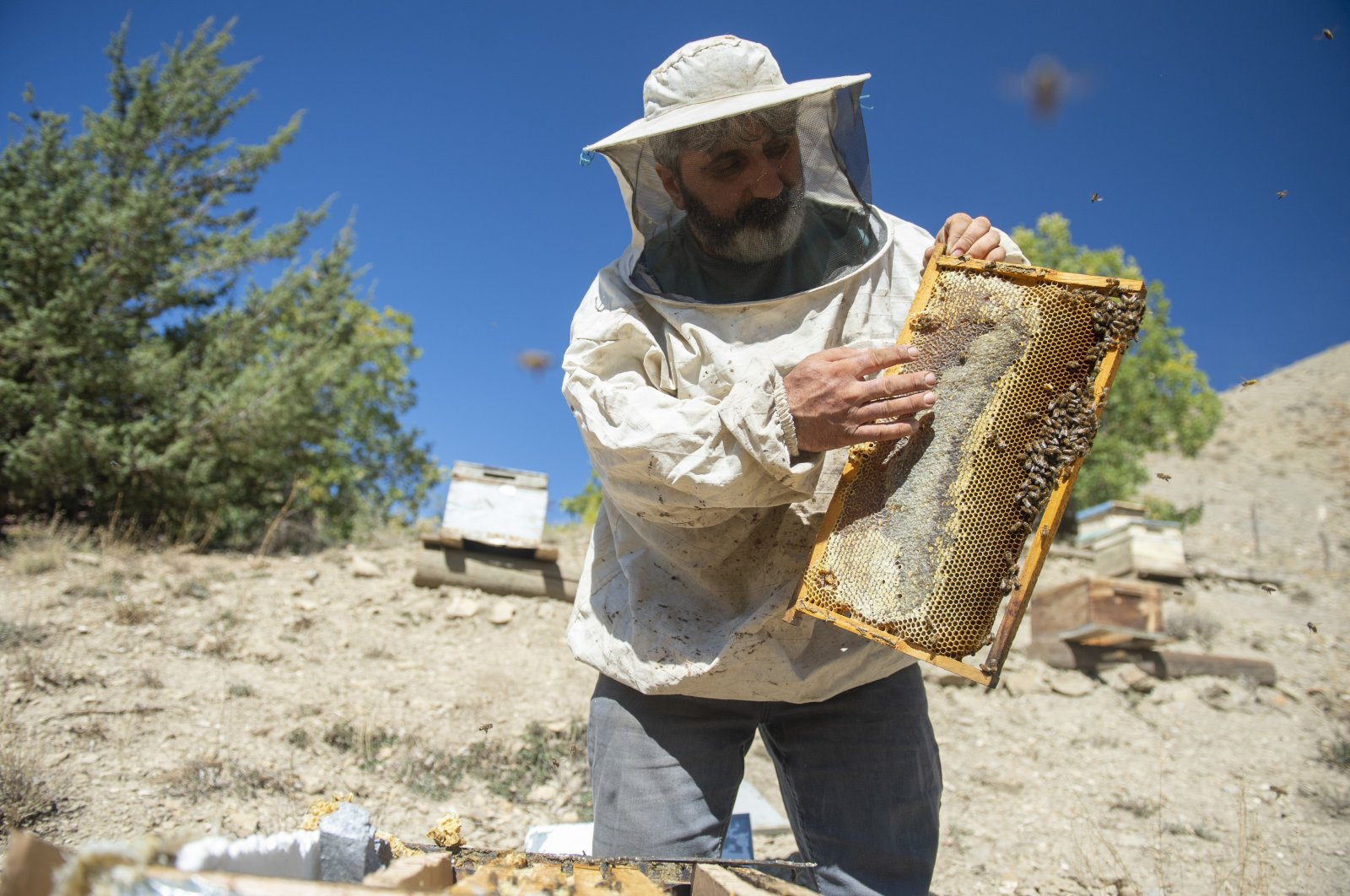 Caner Canerik tends to his beehives, in Tunceli, eastern Turkey, Oct. 10, 2021. (AA PHOTO)