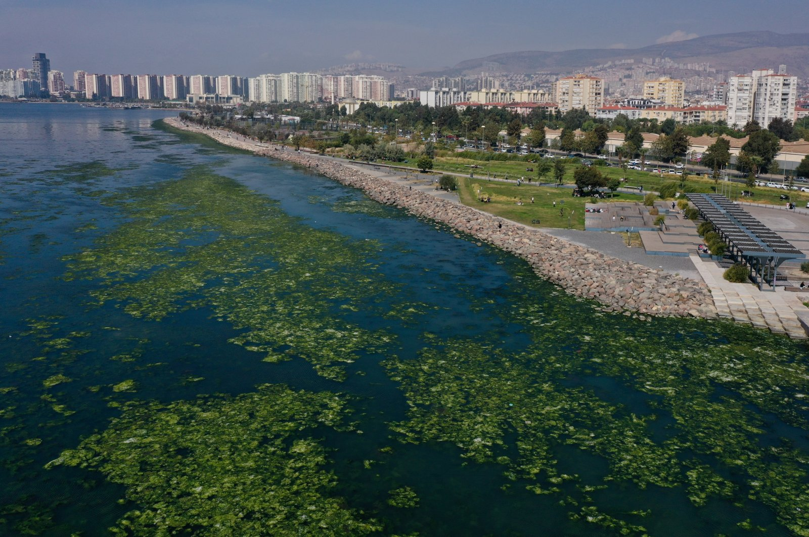 A view of sea lettuce in the Gulf of Izmir, in Izmir, western Turkey, Oct. 11, 2021. (AA PHOTO)