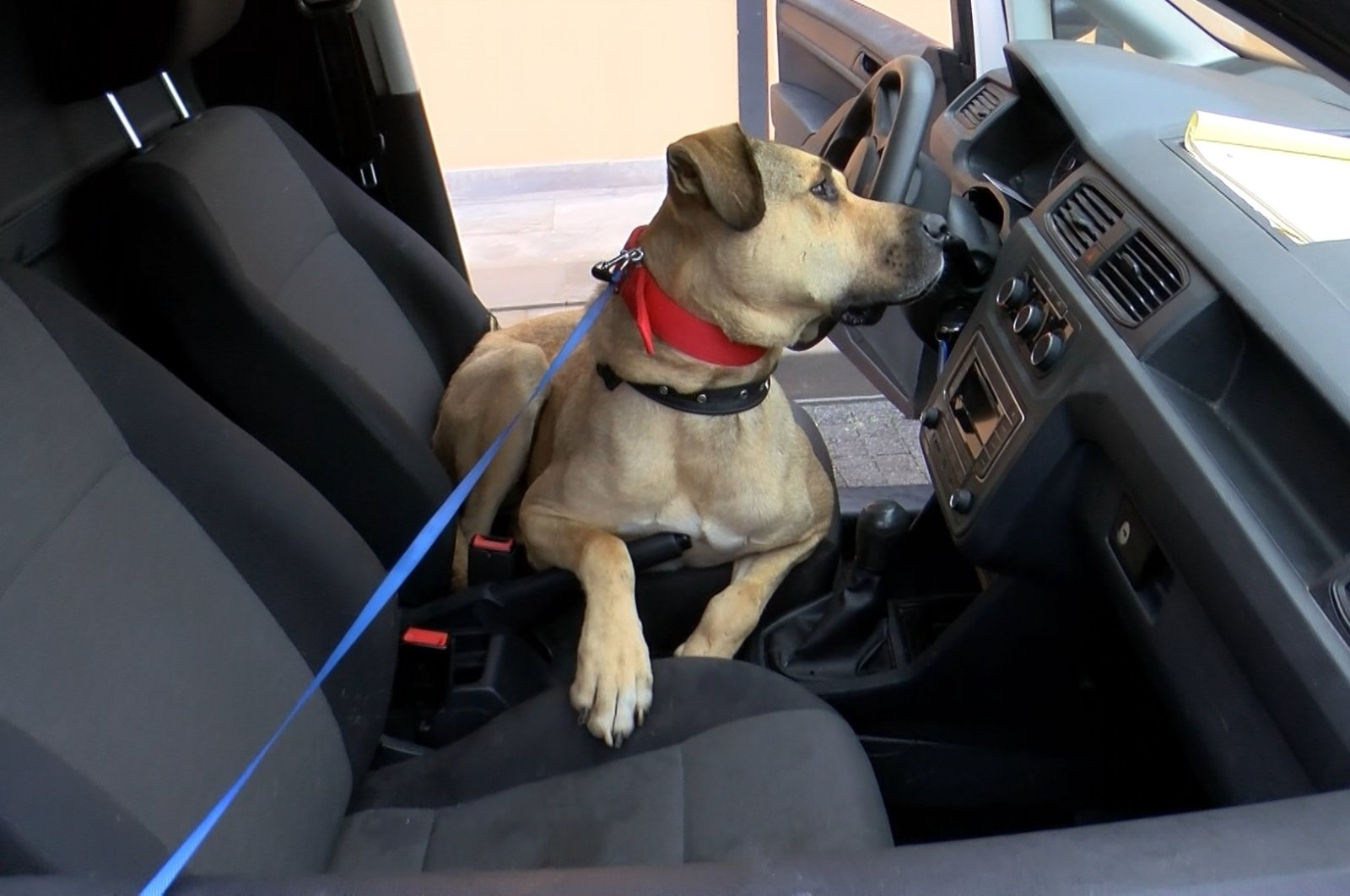 Boji in the driver's seat of a car at the shelter, in Istanbul, Turkey, Oct. 11, 2021. (DHA Photo)