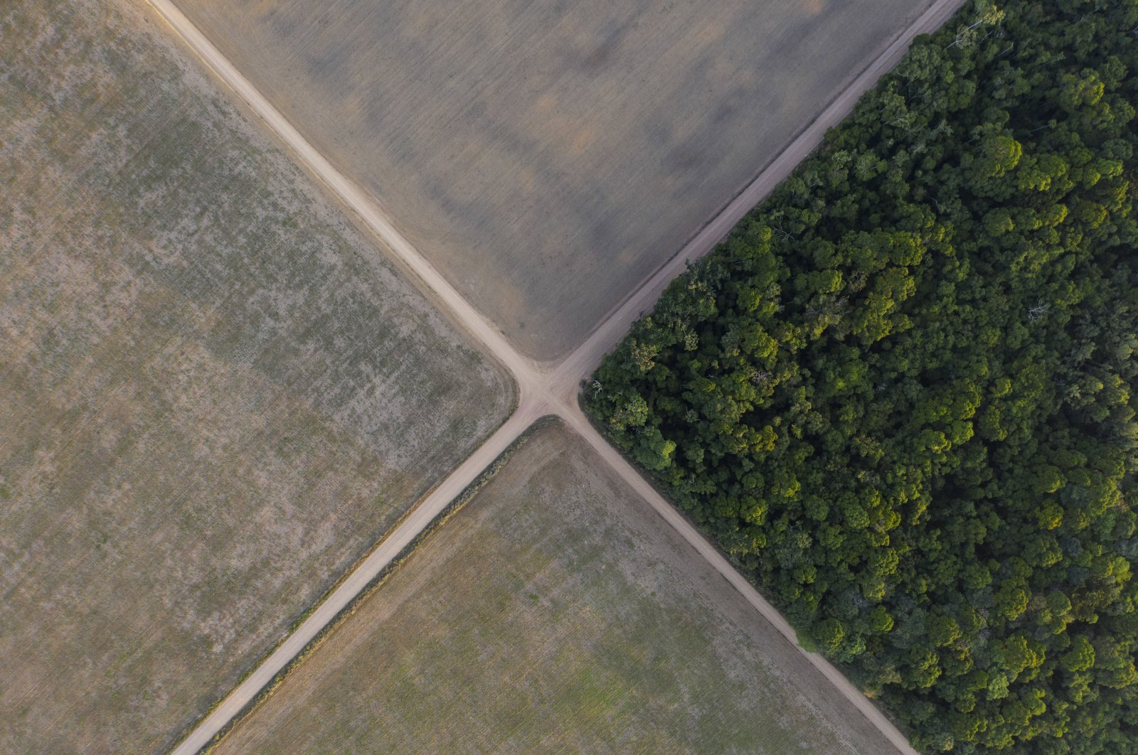A fragment of the Amazon rainforest stands next to soy fields in Belterra, Para state, Brazil, Nov. 30, 2019. (AP Photo)